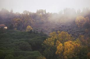 paisaje de otoño brumoso
