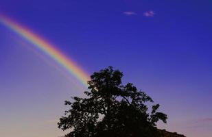 silueta de árbol bajo el arco iris y el cielo azul