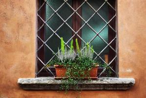Plantas en macetas en el alféizar de la ventana rústica