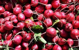 Close-up of radishes in the sun