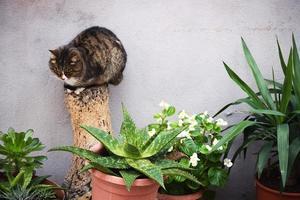 Brown tabby cat on cut wood near aloe vera plant