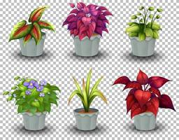 conjunto de plantas en macetas vector
