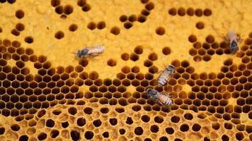 panal de miel 4