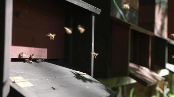 Muchas colmenas en colmenar con entrada de colmena en el frente