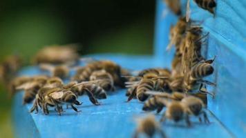 abejas poca profundidad de campo