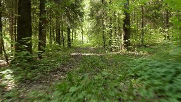 voando na floresta. tiro cam suave e rápido estável. limpo e claro durante o dia.