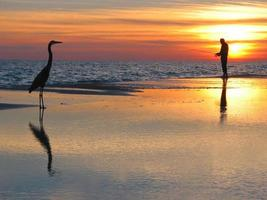 Man fishing with a bird in the foreground during sunset