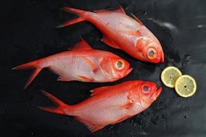fresh raw fish photo