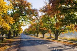 Maldon in Autumn photo