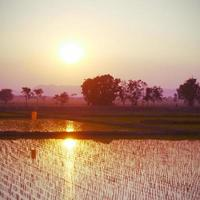 Sunset on green rice farm old vintage retro style