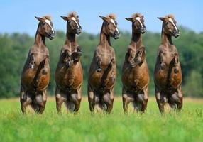 Five rear ponies photo