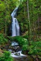 Oirase gorge in fresh green, Aomori, Japan photo