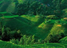 Longsheng rice terraces overlooking photo