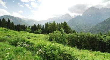 Prado verde en las montañas Dolomitas en verano
