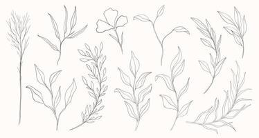 Plant nature hand drawn set