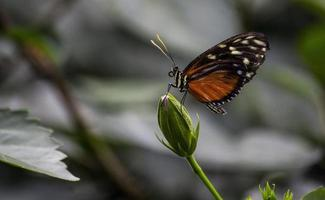 A butterfly lands on a flower bud in nature