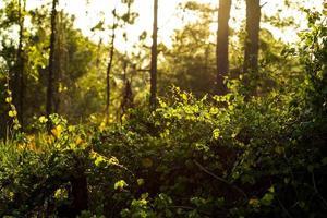 vegetación verde en luz dorada del sol