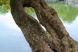 Unusual tree trunk near lake