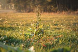 Green grass field in fall season