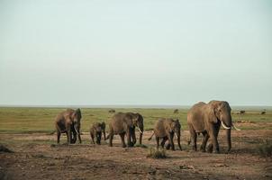 manada de elefantes foto