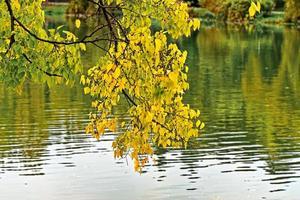 hojas de otoño sobre el agua del lago