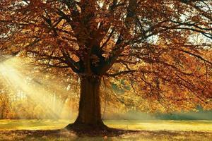 Sunlight illuminating a tree in autumn
