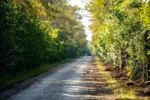 Gravel road in the woods photo