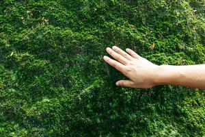 Hand touching moss on a rock
