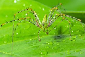 araña verde en una hoja