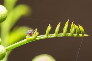 hormiga en una planta verde