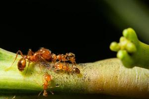 hormigas en una planta verde