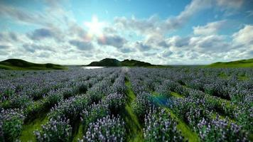 campo de lavanda contra lindas nuvens, câmera mosca