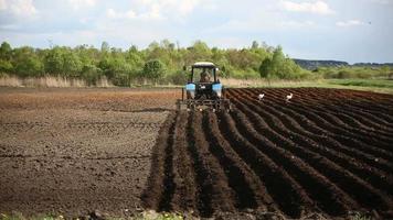 agricultor em trator e pássaros preparando terreno para a semeadura
