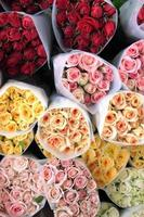 Colored roses - Top view