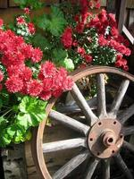 Flowers and a Wheel photo