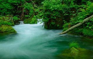 Oirase gorge in Aomori, Japan photo