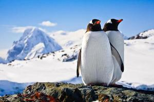 Two penguins standing on a rock