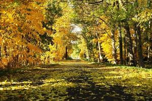 Golden trees photo