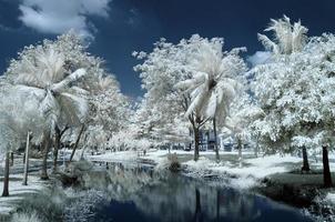 Public park at Nontaburi , Thailand taken in Near Infrared
