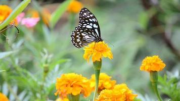 Hermosa mariposa monarca en flor de jardín
