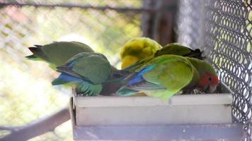 Lindo grupo de aves loro en jaula grande