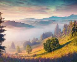 manhã de verão colorido nas montanhas dos Cárpatos.