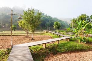 Walkway over vegetable plot