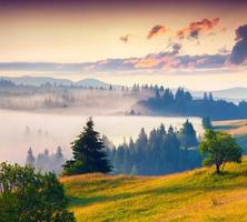 Foggy summer sunrise in the mountains.