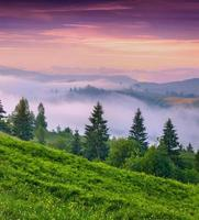 Foggy summer morning in the mountains.