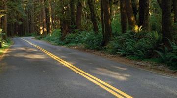 Two Lane Road Cuts Through Rainforest