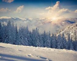 hermosa mañana de invierno en las montañas