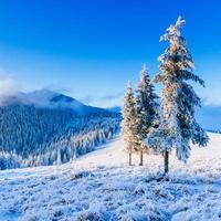 árbol mágico de invierno cubierto de nieve