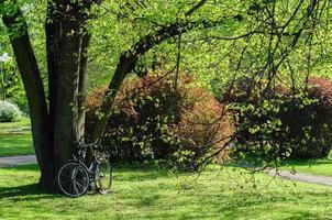 bicicleta no parque perto de uma árvore grande