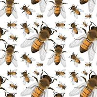 Bee insect seamless background